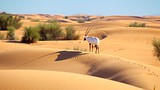 Dubai Desert - Dubai Emirate - Tourism Media