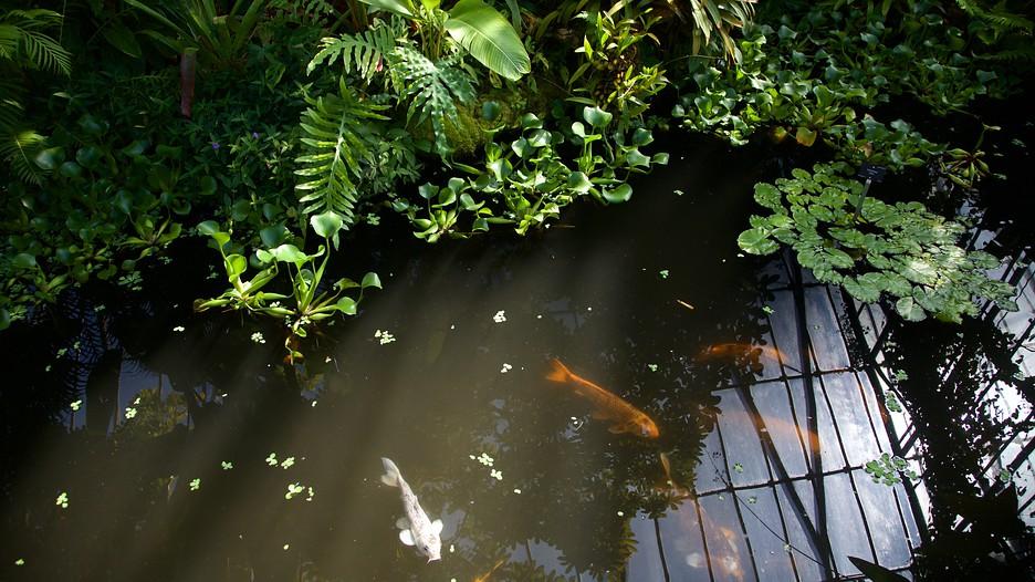 Real Jardín Botánico: Información de Real Jardín Botánico ...