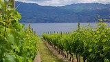 Quails' Gate Estate Winery - British Columbia - Tourism Media
