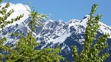 Mount Revelstoke National Park - British Columbia - Tourism Media