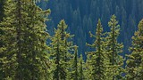 Top of the World Provincial Park - British Columbia - Tourism Media