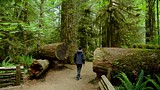 MacMillan Provincial Park - British Columbia - Tourism Media