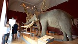 Royal Albert Museum and Gallery - Exeter - Tourism Media