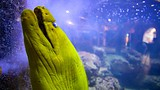 Key West Aquarium - Florida - Tourism Media