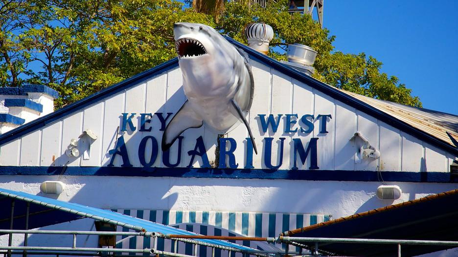 Key West Aquarium In Key West Florida Expedia