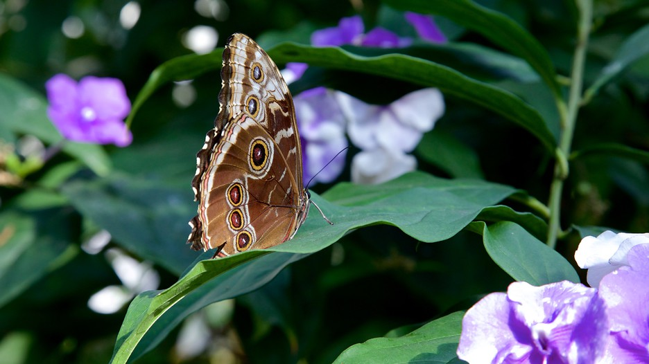 Key West Butterfly and Nature Conservatory.