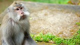 Tanjung Monkey Forest - Lombok - Tourism Media