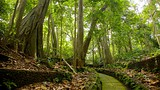 Ubud Monkey Forest - Indonesia - Tourism Media