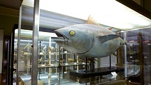 Museum of Natural History - Funchal