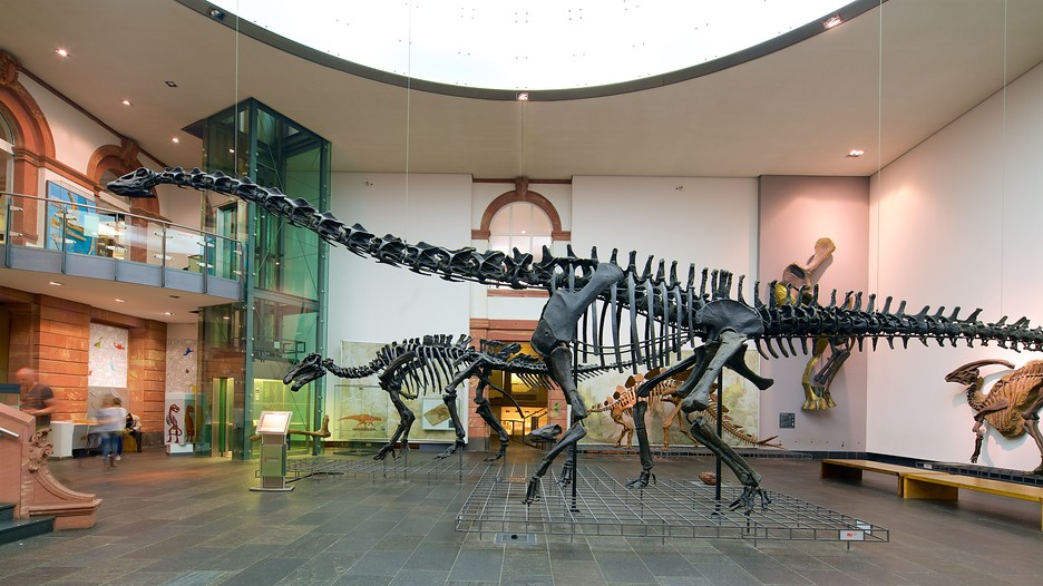 Senckenberg Natural History Museum Frankfurt
