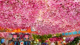 Flower Market - Netherlands - Tourism Media