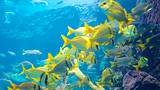 Atlantis Aquarium - Bahamas - Tourism Media