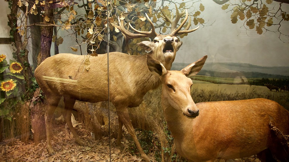 Museum Of Natural History Helsinki