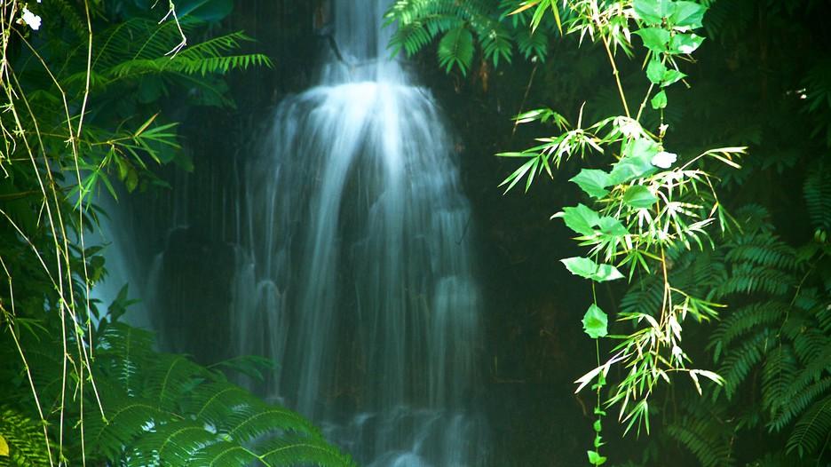 Akaka Falls in Hawaii (Große Insel) - Expedia.de