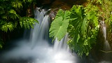 Showing item 22 of 65. Akaka Falls - Hawaii Island - Tourism Media
