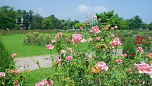 Zakir Rose Garden - Chandigarh