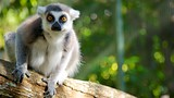 Cairns Tropical Zoo - Palm Cove - Tourism Media