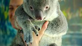 Cairns Tropical Zoo - Cairns - Tourism Media