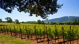 Ledson Winery and Vineyards - Kenwood - Tourism Media