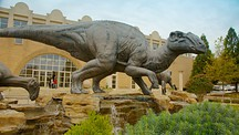 Fernbank Museum of Natural History - Atlanta