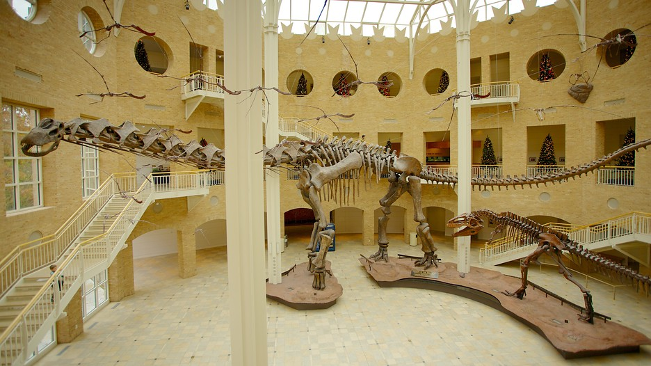 Image result for fernbank