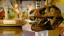 Fernbank Science Center - Atlanta