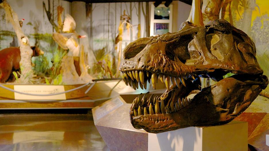 Natural Science Museum Atlanta Ga