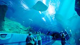 Georgia Aquarium - Georgia - Tourism Media