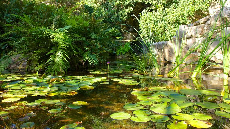 Zilker Botanical Garden in Austin Texas Expedia