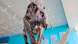 Maryland Science Center - Maryland - Tourism Media