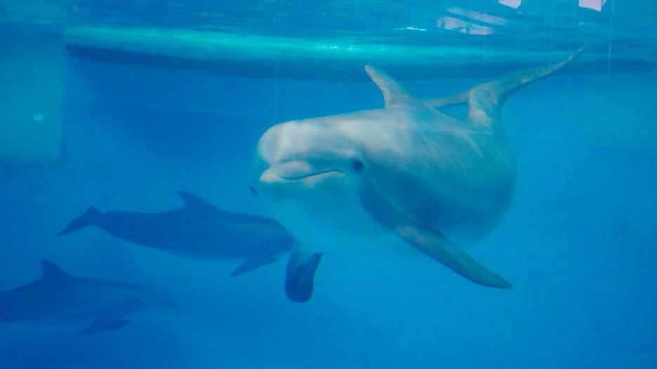 The national aquarium in baltimore an