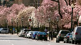 Beacon Hill - Boston - Greater Boston Convention & Visitors Bureau