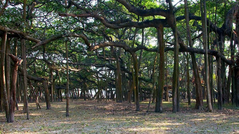Resultado de imagem para Jardim Botânico de Calcutá