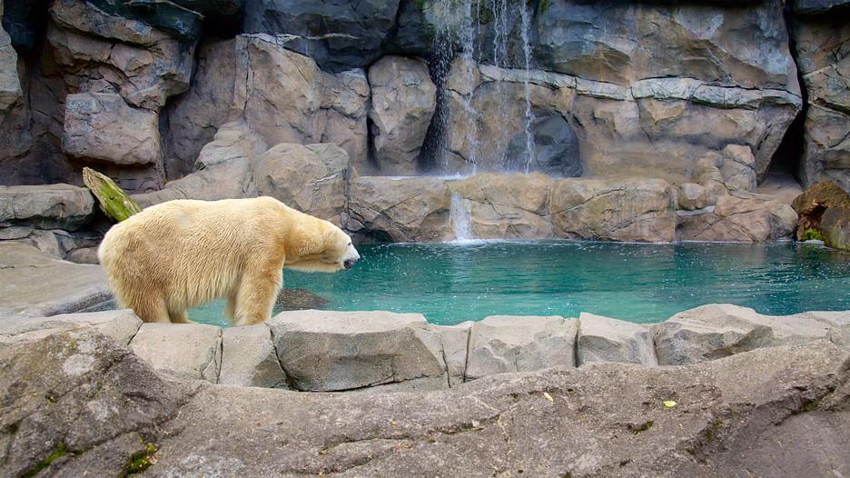 Cincinnati Zoo And Botanical Garden In Cincinnati Ohio