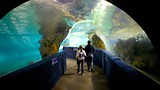 Greater Cleveland Aquarium - Ohio - Tourism Media