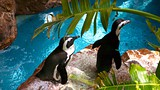 Dallas World Aquarium - Dallas (e dintorni) - Tourism Media