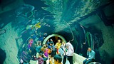 Dallas World Aquarium - Texas - Tourism Media
