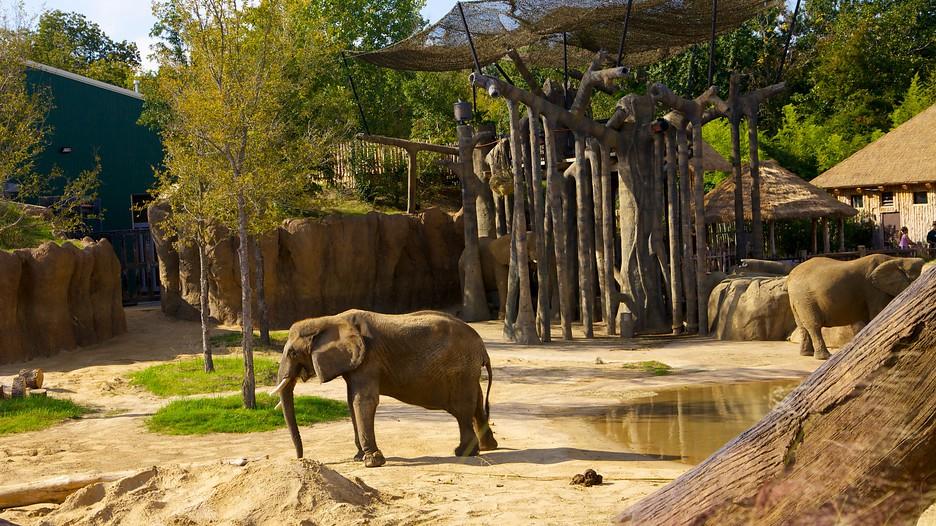 Dallas Zoo In Dallas Texas Expedia