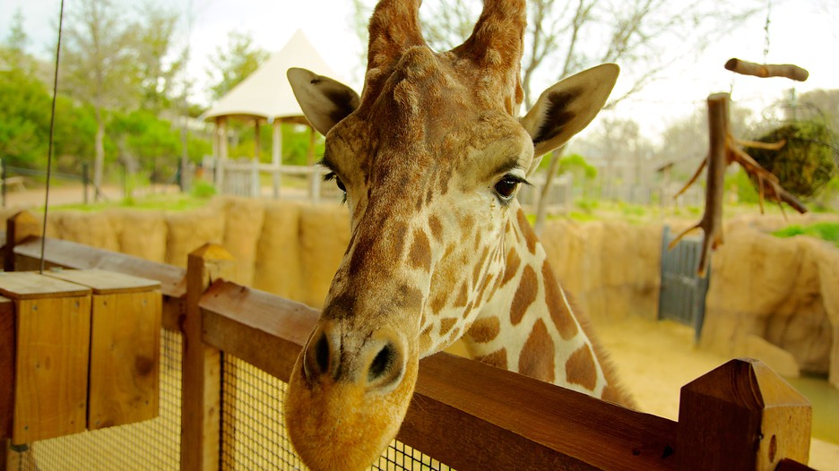Hotels Close To Dallas Zoo