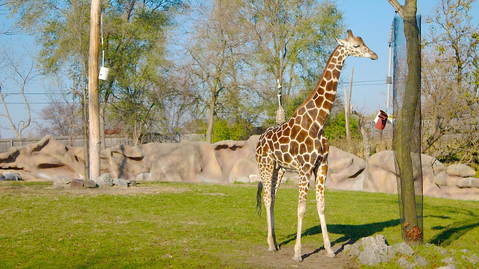 Hotels Close To Detroit Zoo