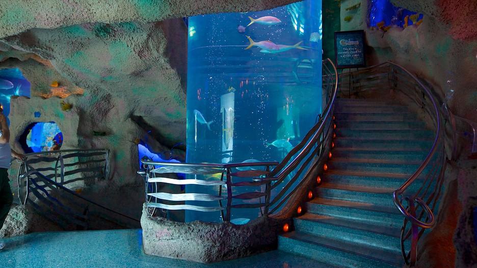 Aquarium Houston Texas Related Keywords & Suggestions - Aquarium ...