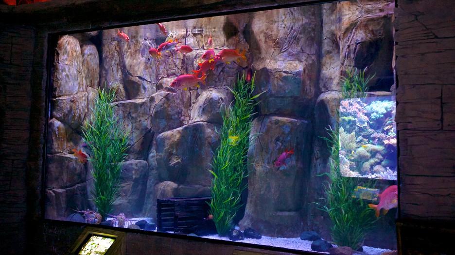 Downtown Aquarium In Houston Texas