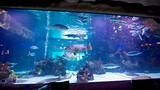 Houston Aquarium Coupon