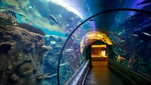 Shark Reef no Mandalay Bay - Las Vegas (e arredores)