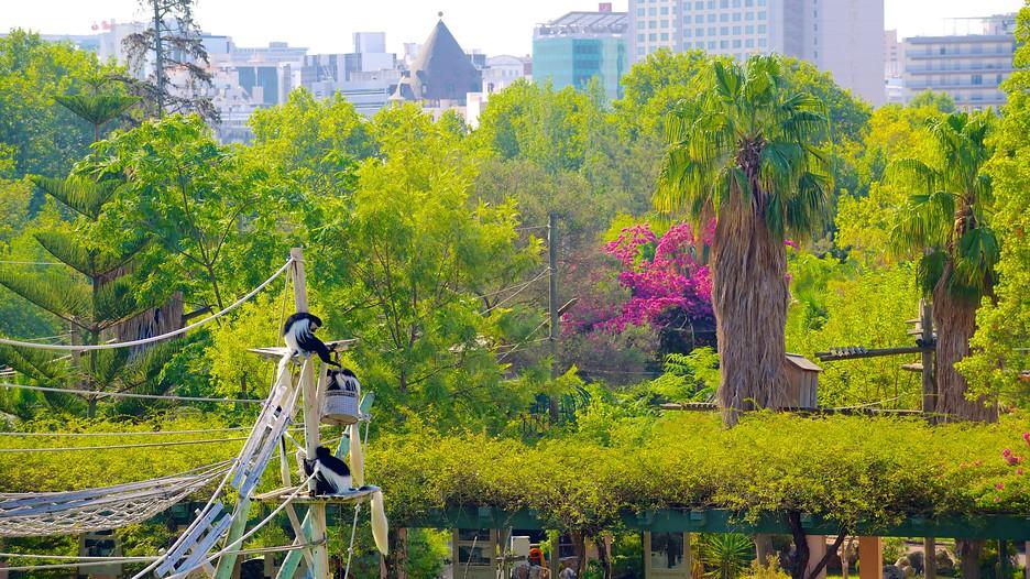 Jardim Zoológico - Homepage