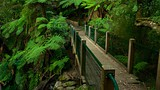Sherbrooke Forest - Melbourne - Tourism Media