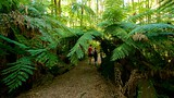 Dandenong Ranges National Park - Melbourne - Tourism Media