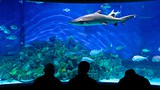 Melbourne Aquarium - Melbourne - Tourism Media