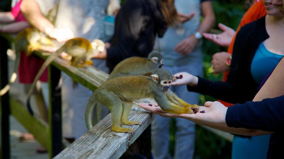 Monkey Jungle Miami Beach Florida