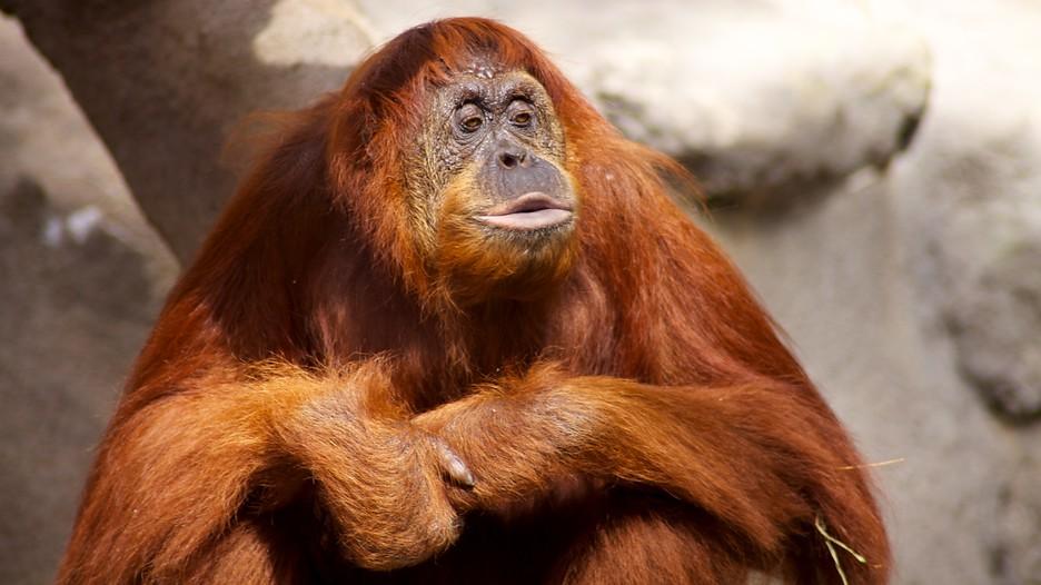 Monkey Jungle In Miami Florida Expedia